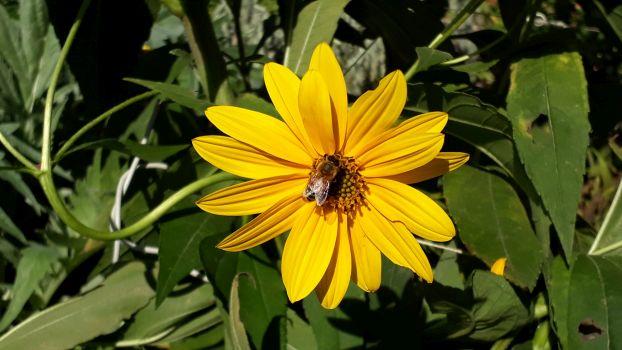 È partito il corso di apicoltura urbana al Pilastro!